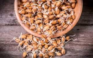 Самогон из пшеницы: как его правильно сделать?